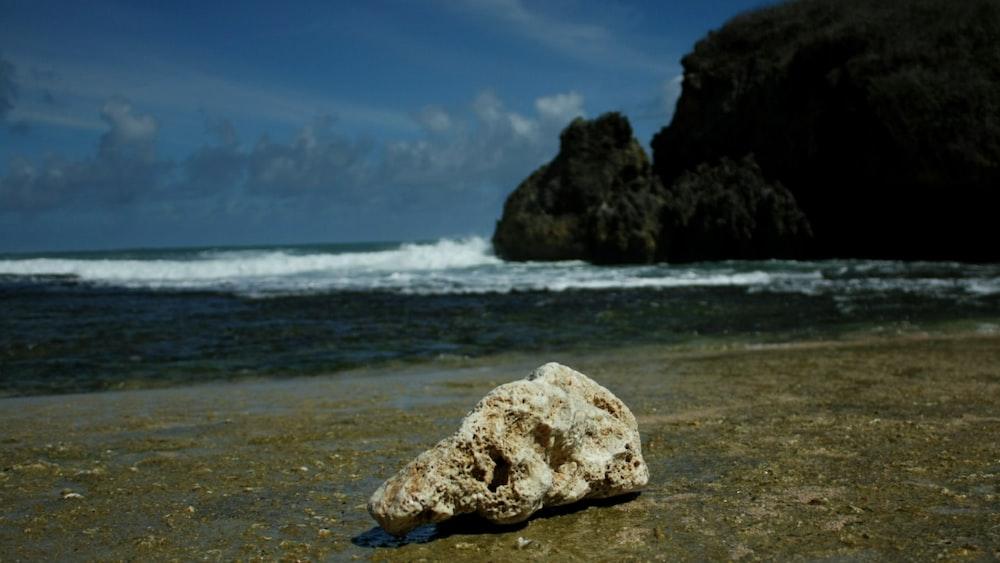 white stone on shore at daytime