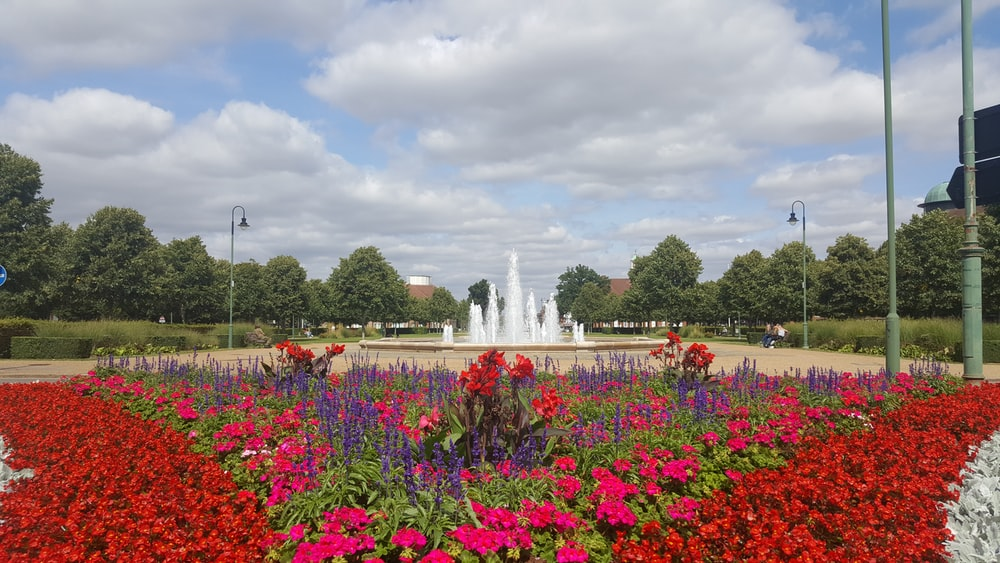 red flower field viewing water fountain under white and blue skies during daytime