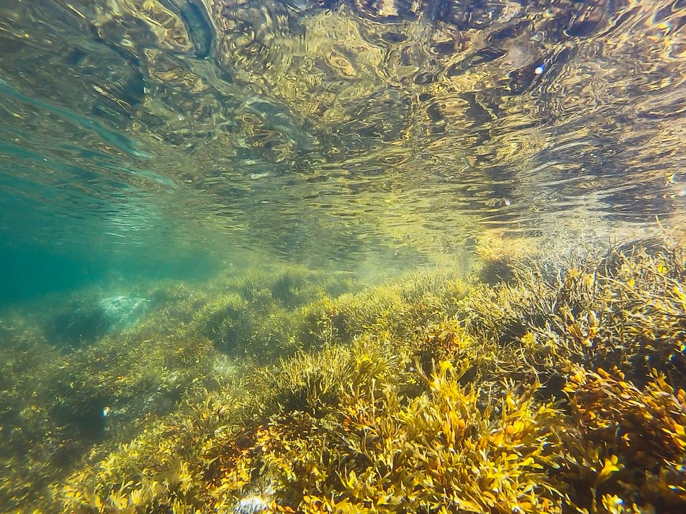 green algae underwater photography