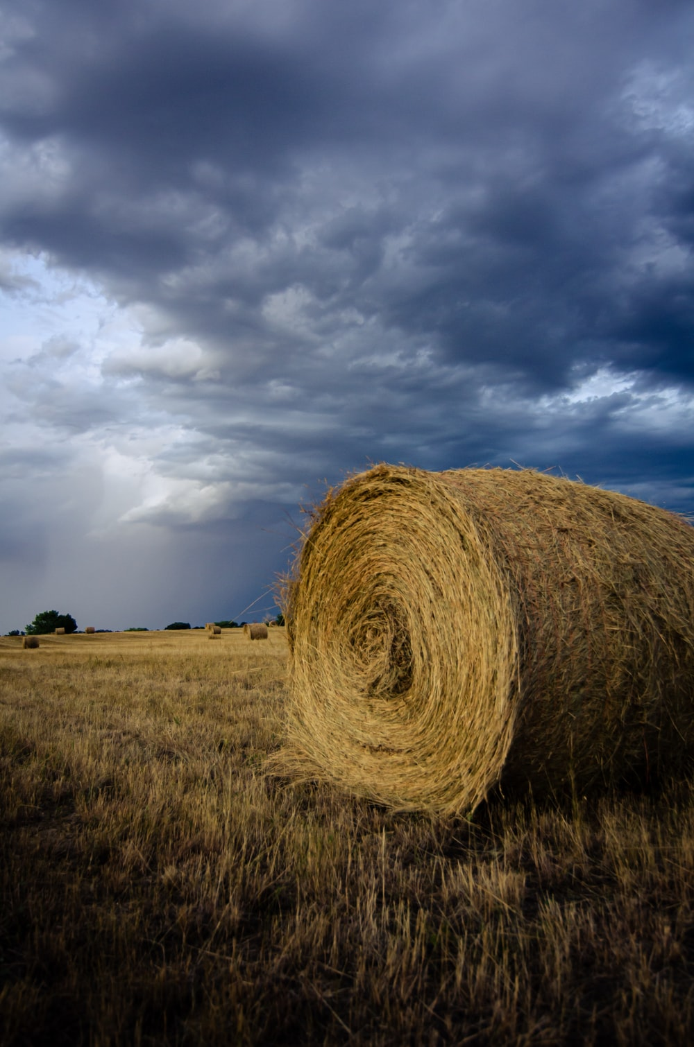 brown hay close-up photography