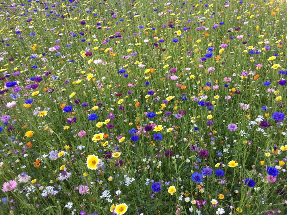 field of white, blue, and yellow-petaled flowesr