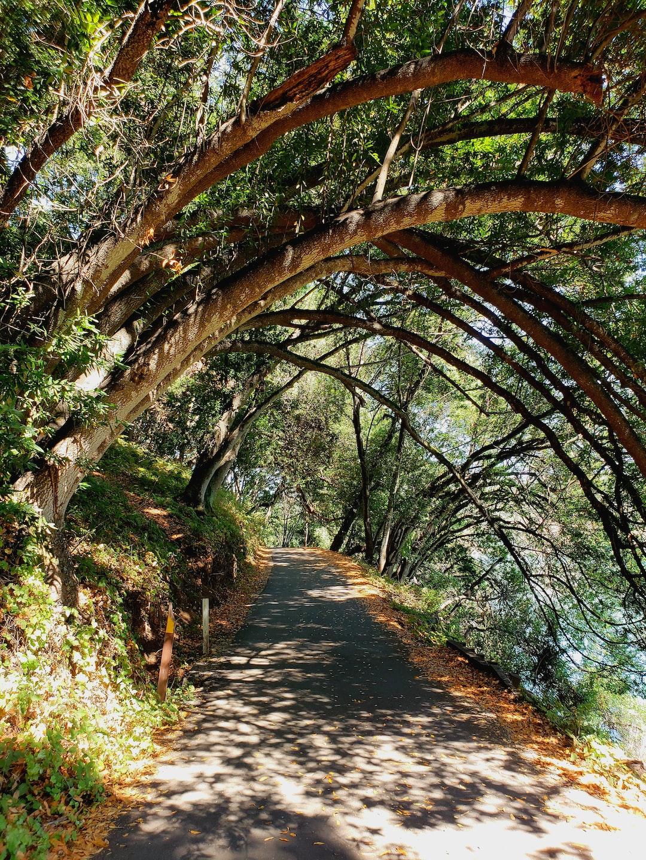 Path along Lake Chabot