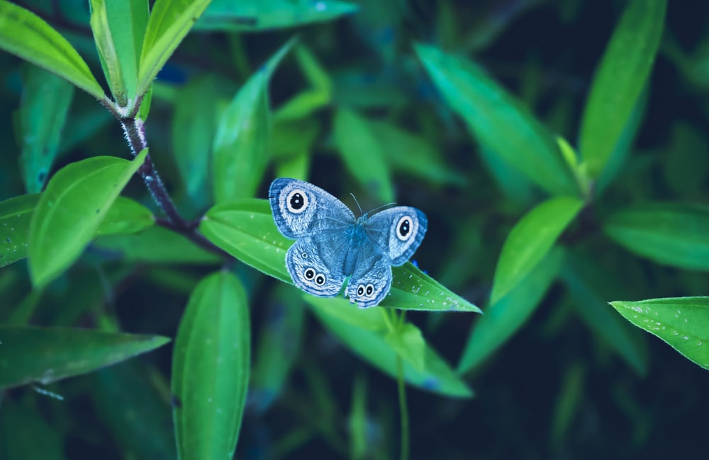 blue and black butterfly on green leaf