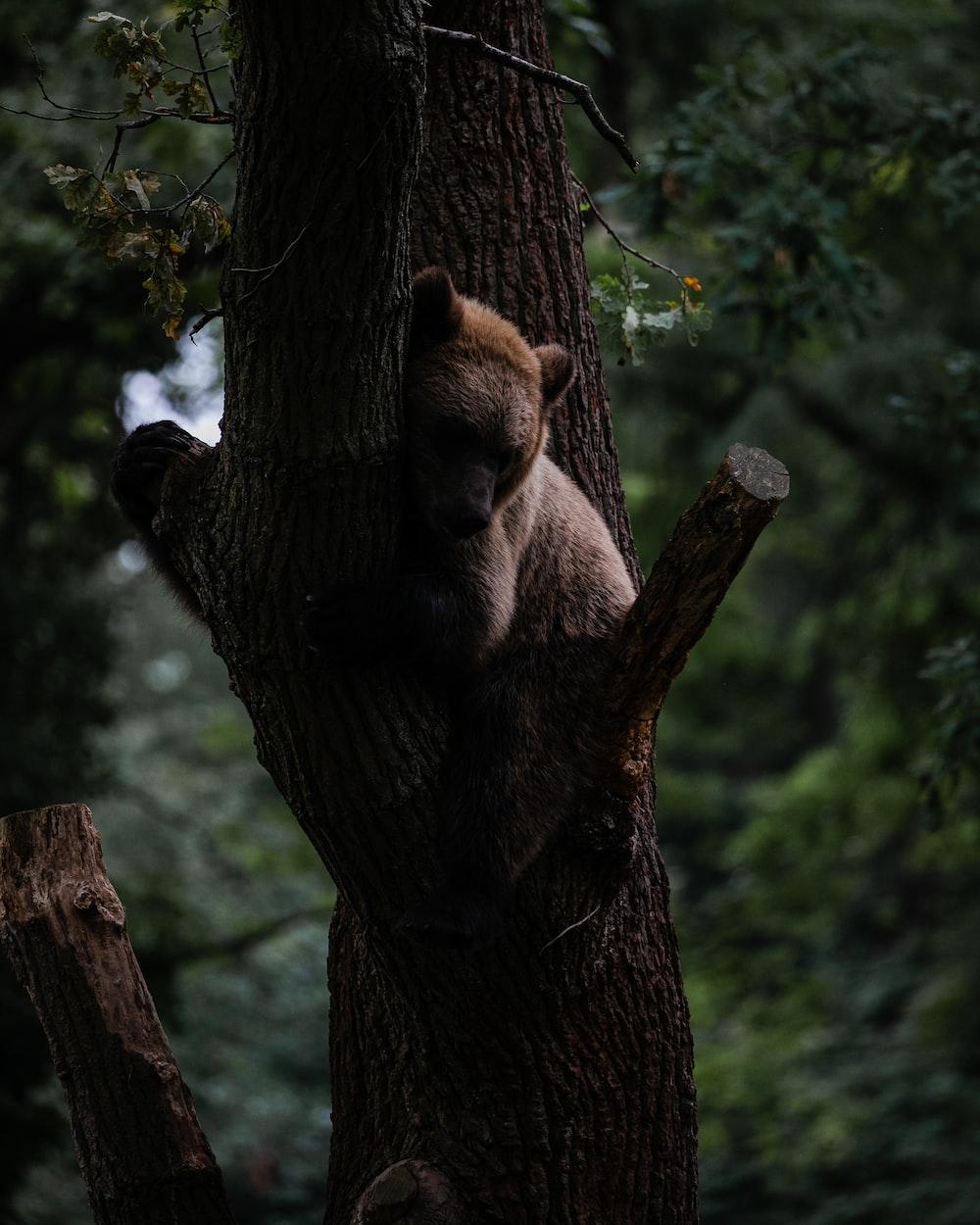 brown bear lying on tree