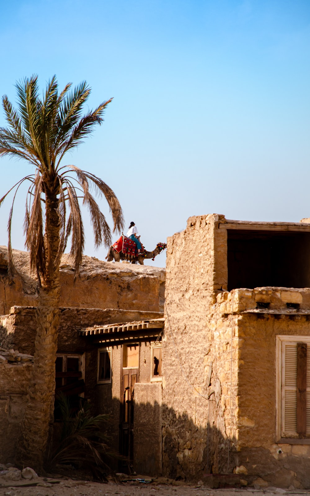 person riding camel near building and tree