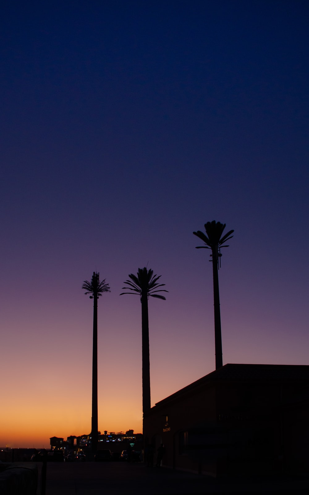 silhouette of tall trees