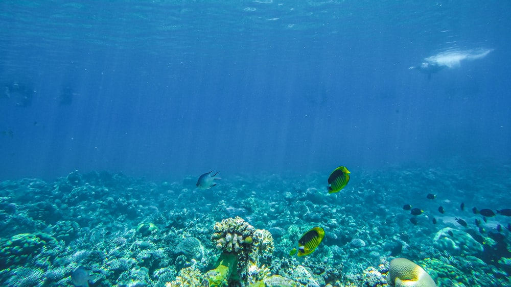 underwater photo of coral reefs and fish