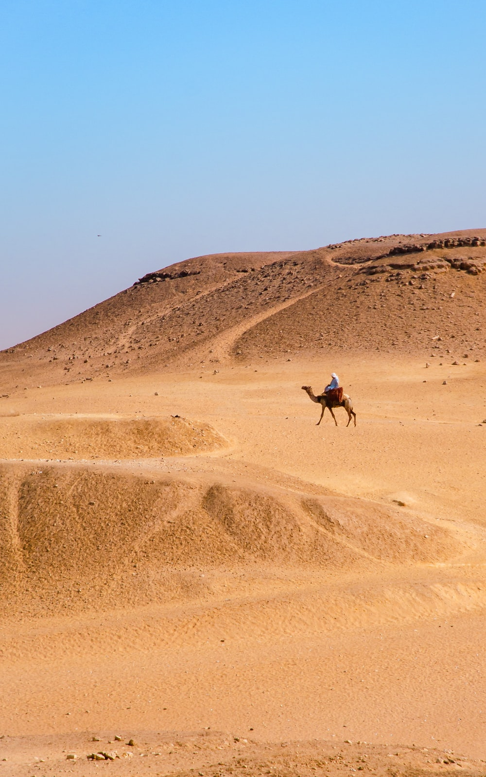 person sitting on camel