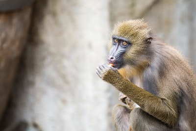 focus photography of yellow primate