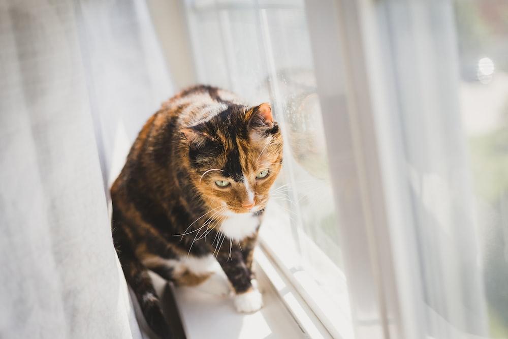 cat walking beside glass window