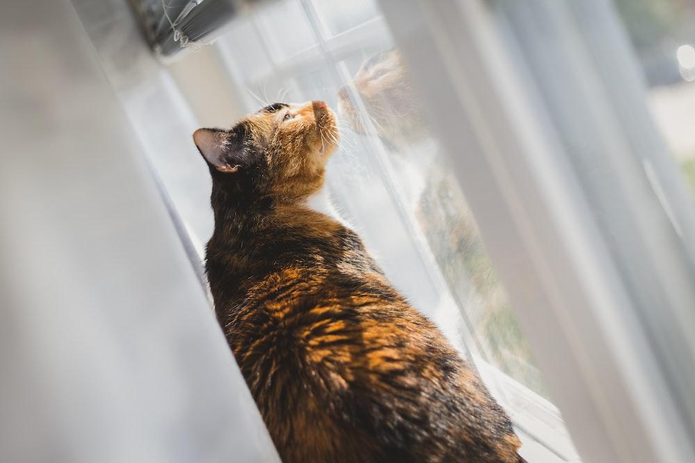 short-fur brown cat