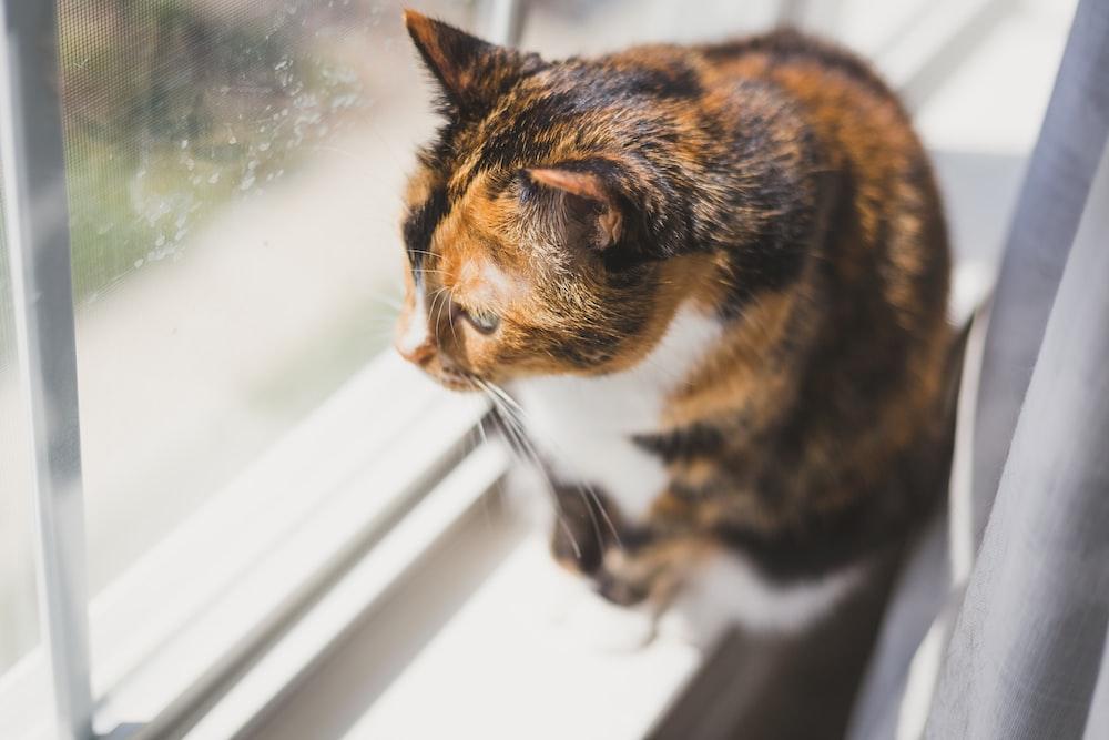 tortoiseshell cat sitting near glass window