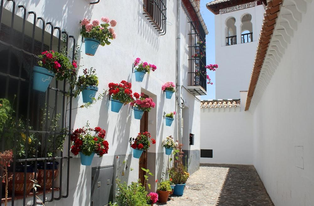 macetas azules colgadas en la pared blanca