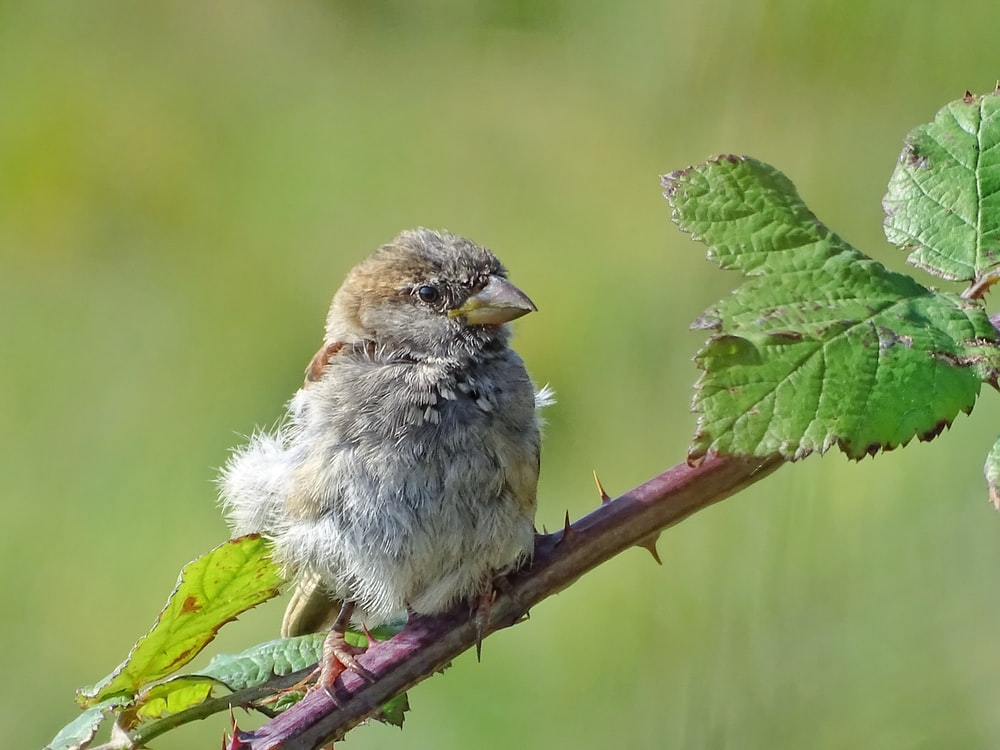 grey bird perching on brown branch