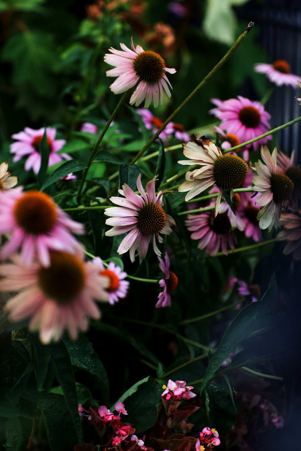 pink and brown petaled flowers