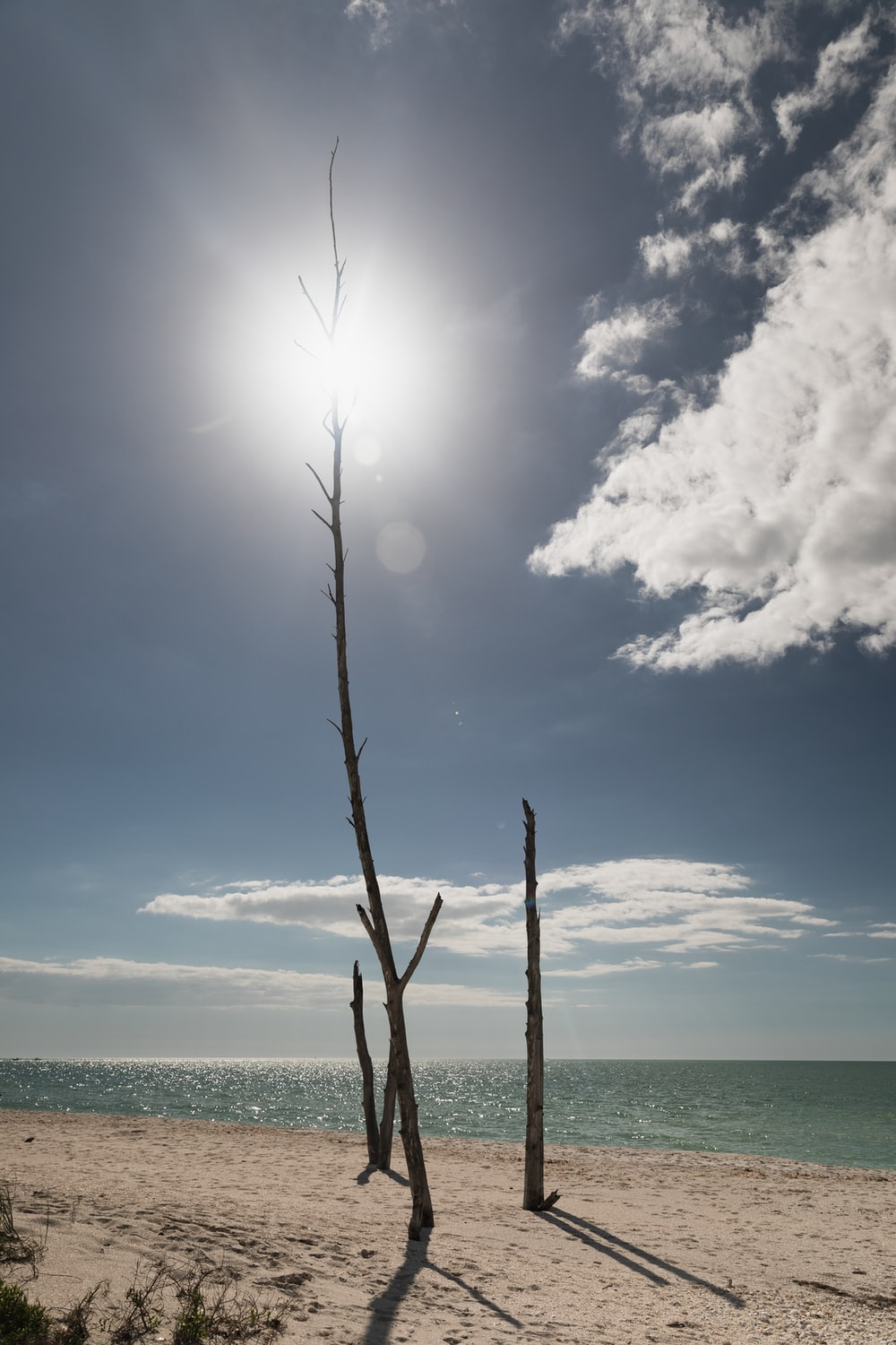 bare tree on shore during daytime