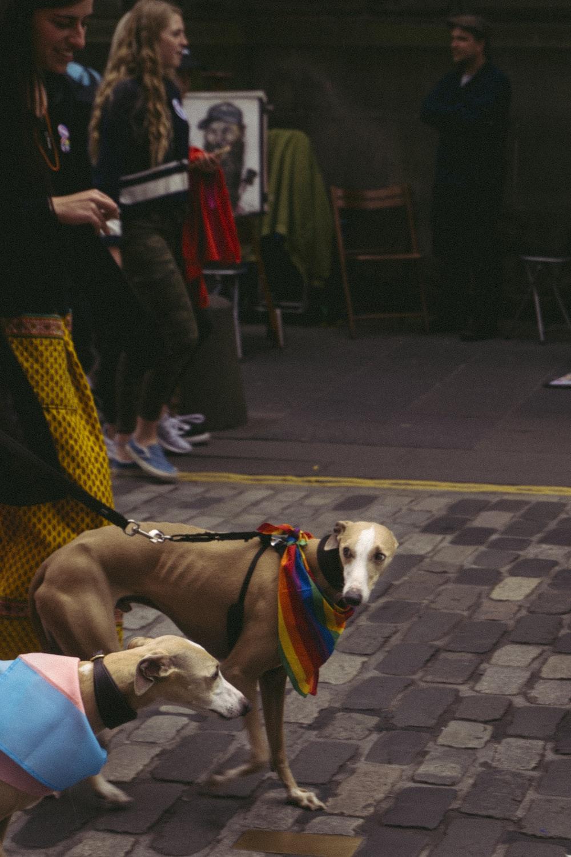 brown dog with collar near woman
