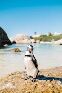 Penguin Meat penguin stories