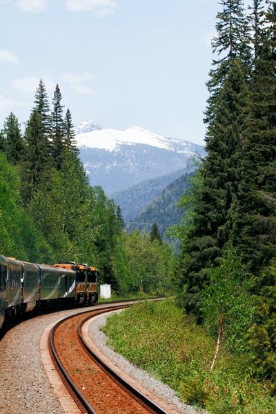 pine trees beside train during daytime
