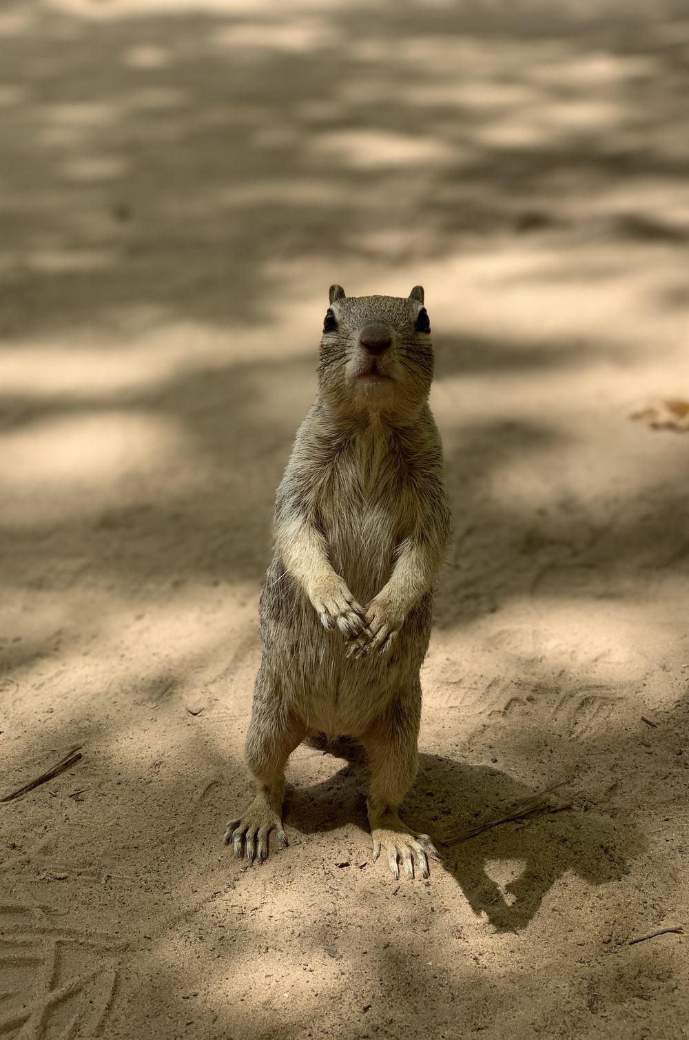 closeup photo of standing rodent