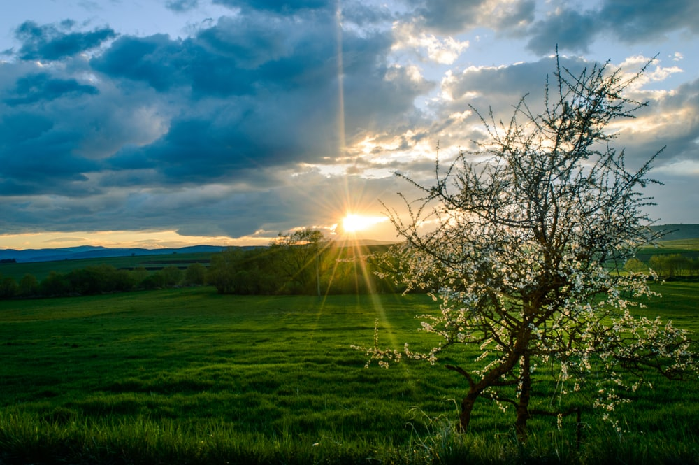 green grass filed under dramatic clouds during sunset
