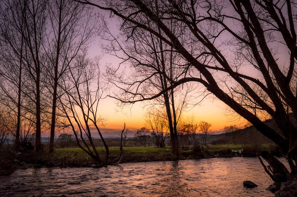 leafless tree near river