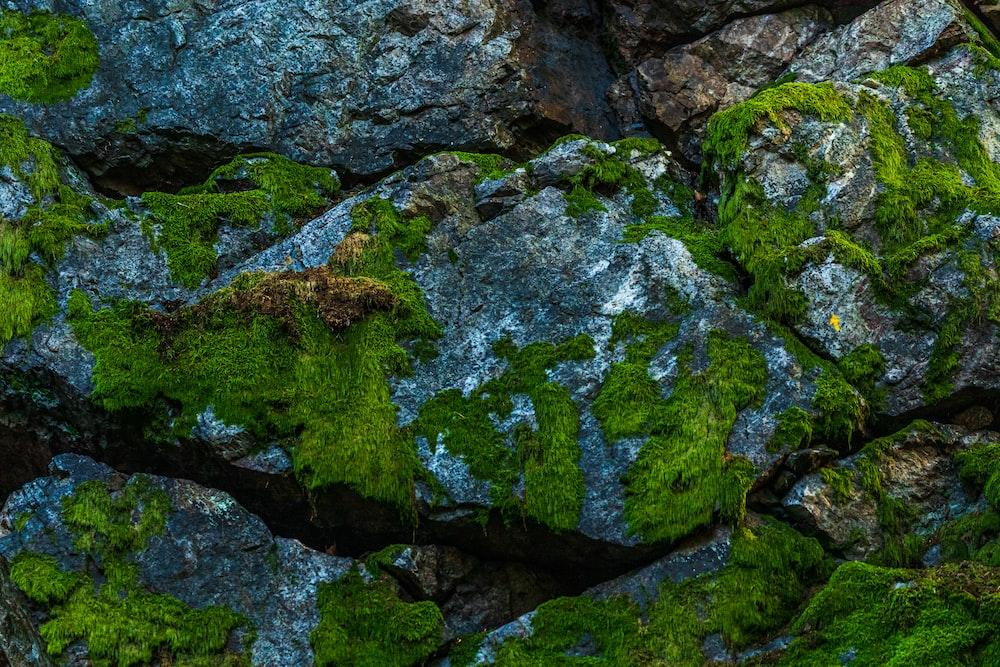 rocks with algae