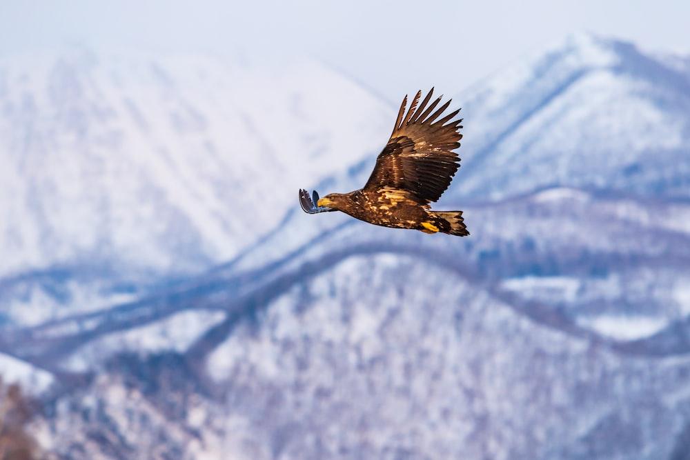 eagle on flight