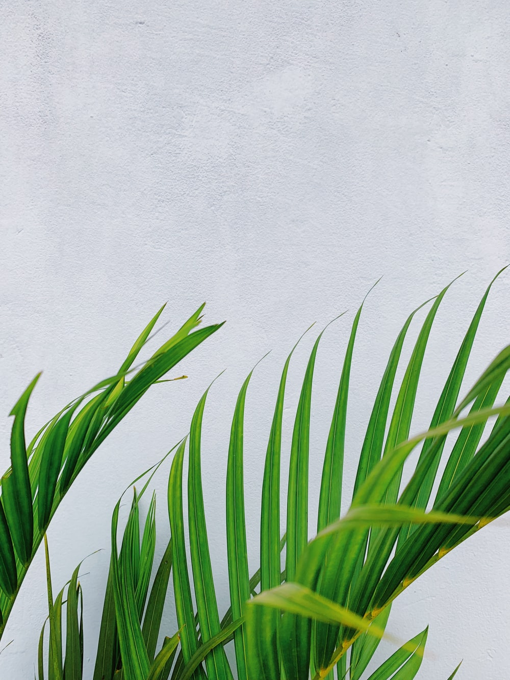 closeup photo of green palm tree leaf