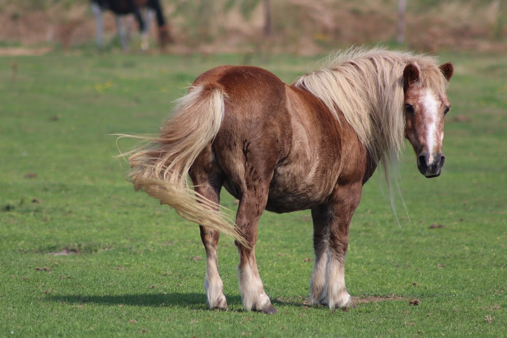 brown horse on green grass