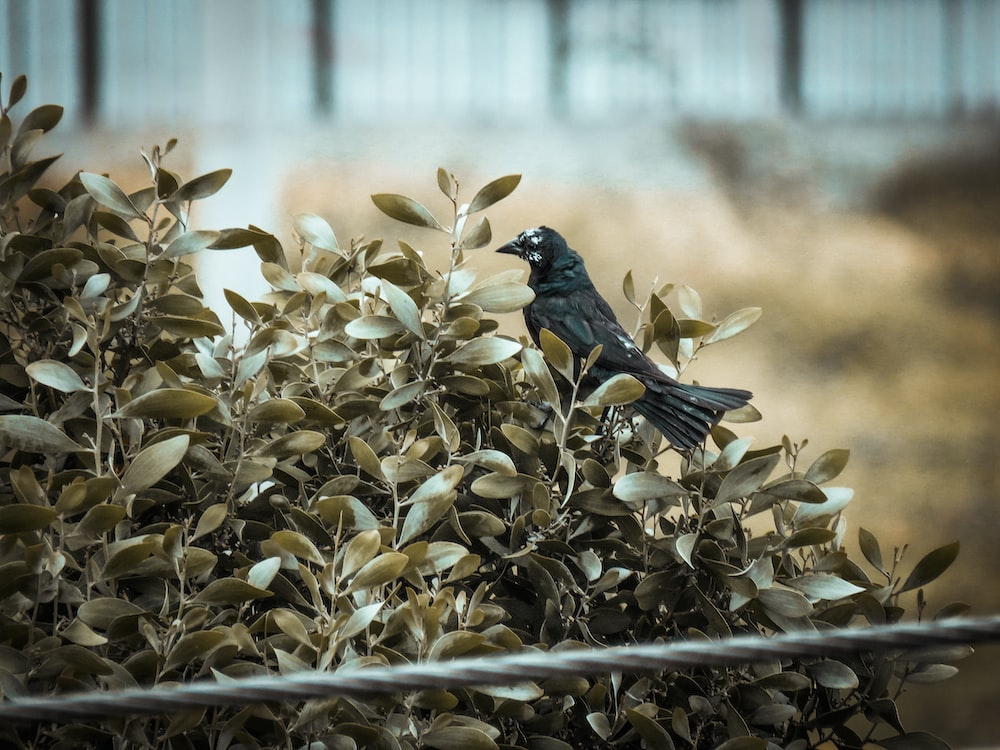 black bird perching on brown plant