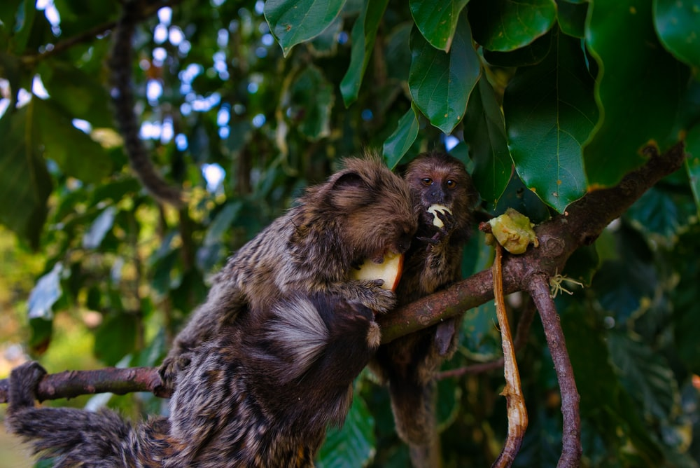 primate on tree branch