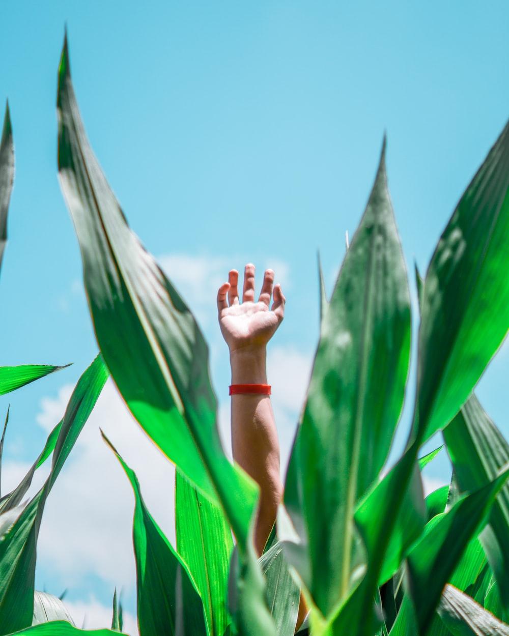 human hand raising at daytime