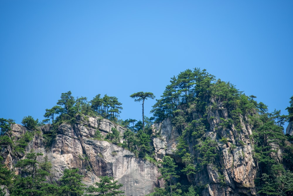 trees on rocky cliff
