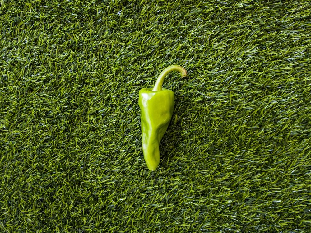 green bell pepper on green grass