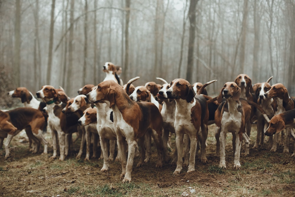 pack of dogs close-up photography