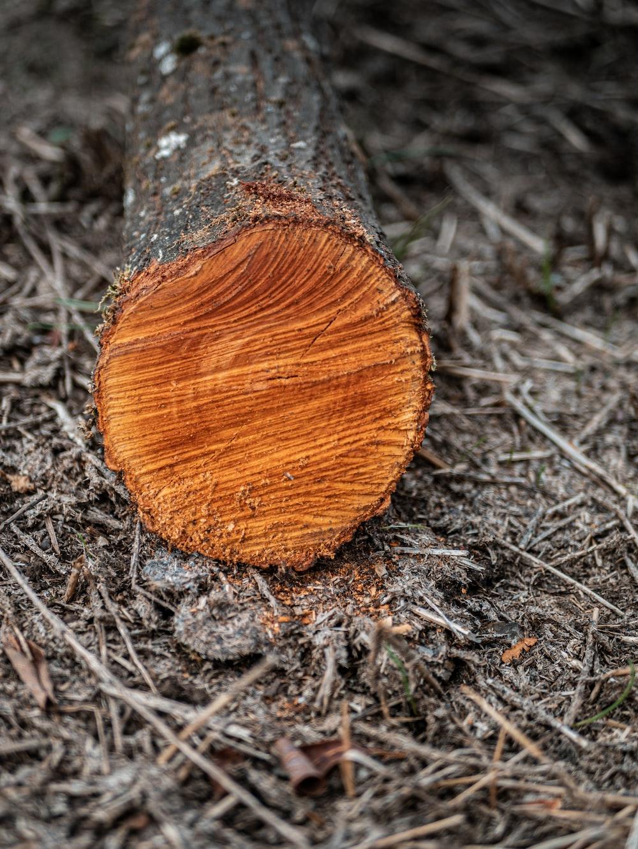 gray cut wood on ground