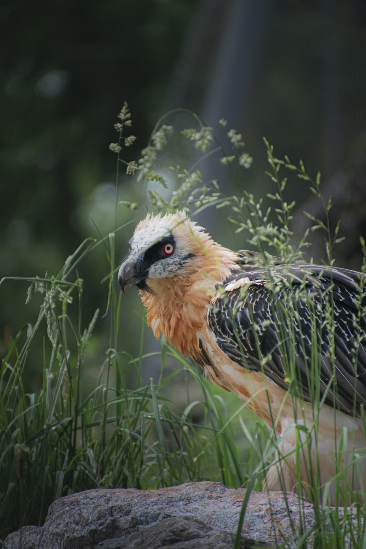 brown and black bird near green grass during daytime