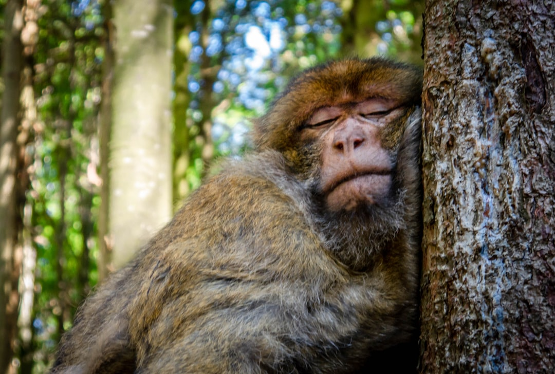 One Sleepy And Cute Little Monkey!