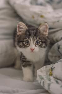 Seven little kittens~ kittens stories