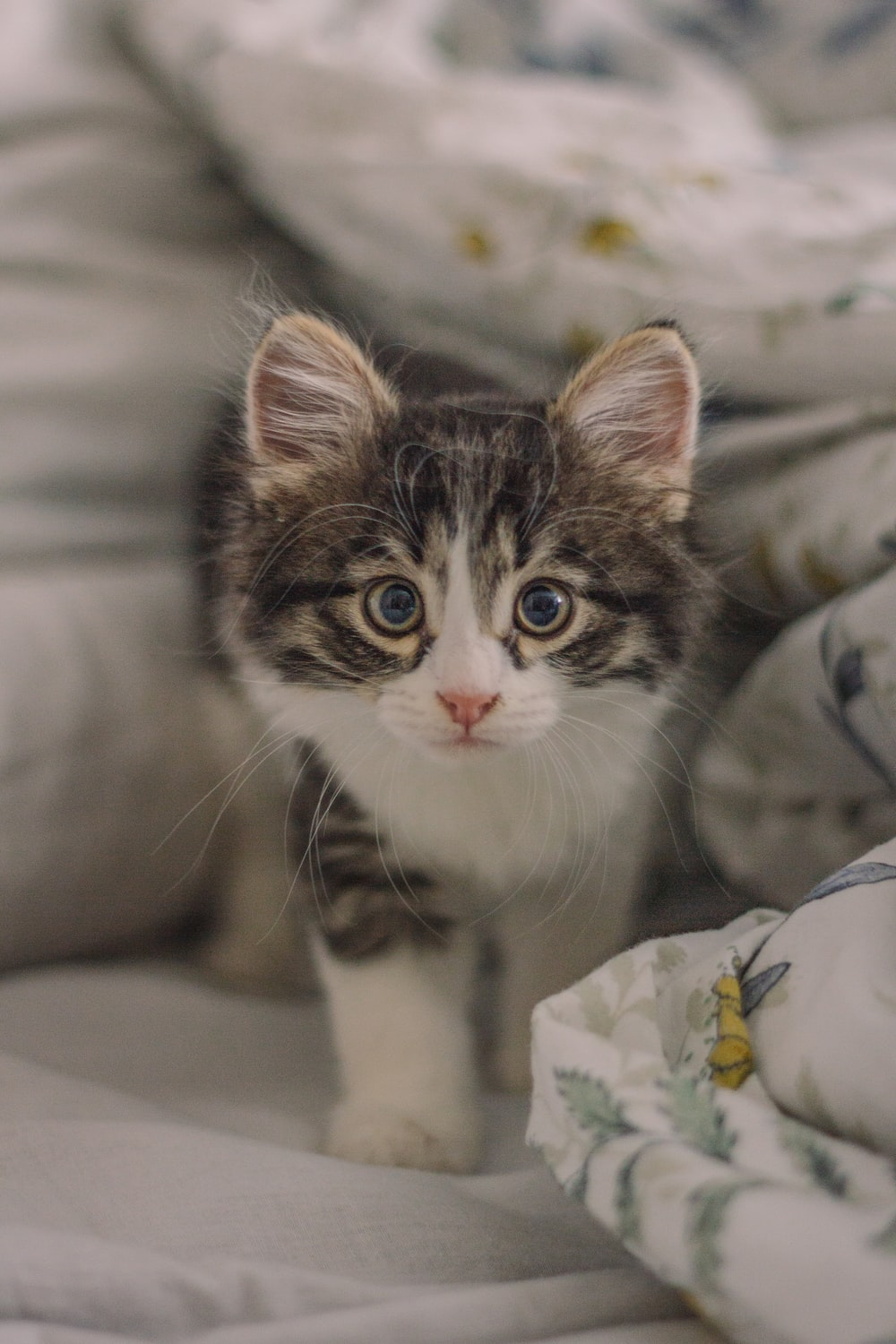 white and gray kitten on bed