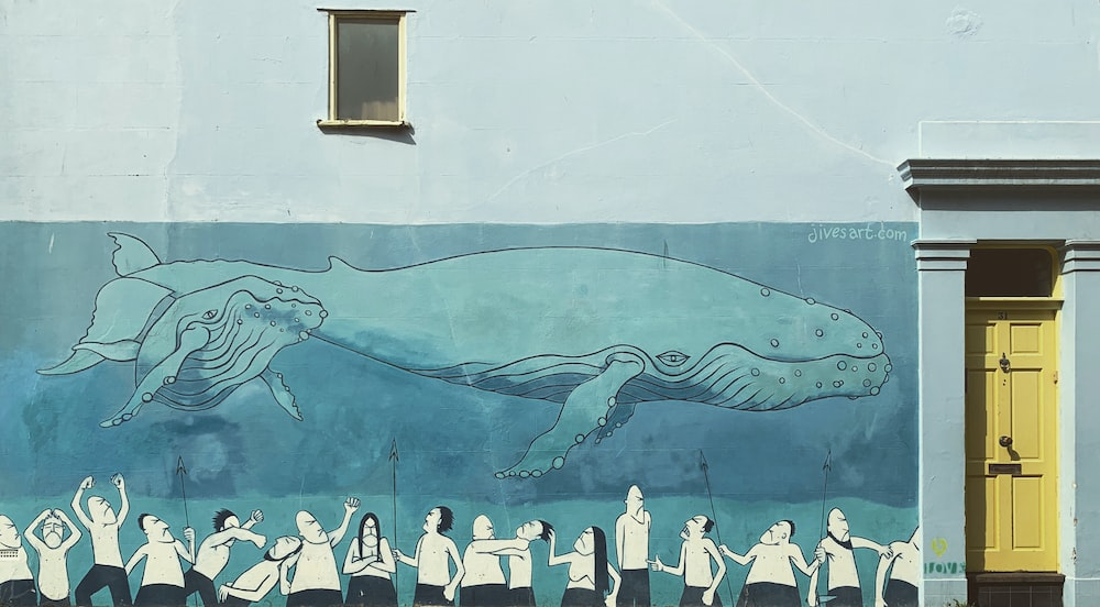 gray whale shark sketch on wall