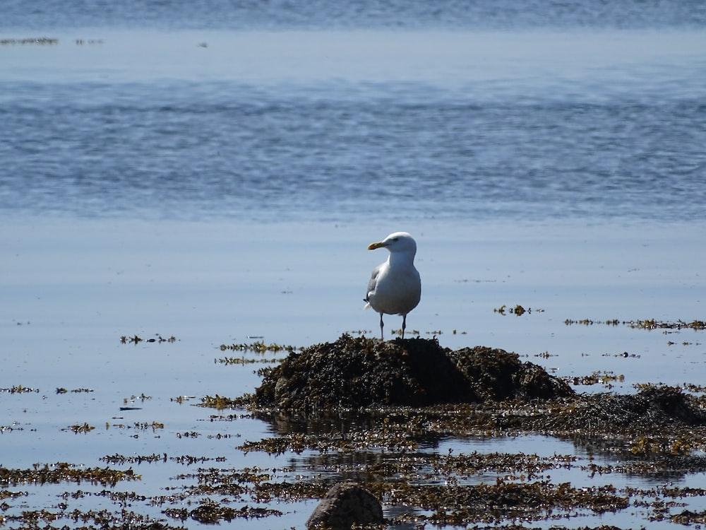 seagull on rock in seashore