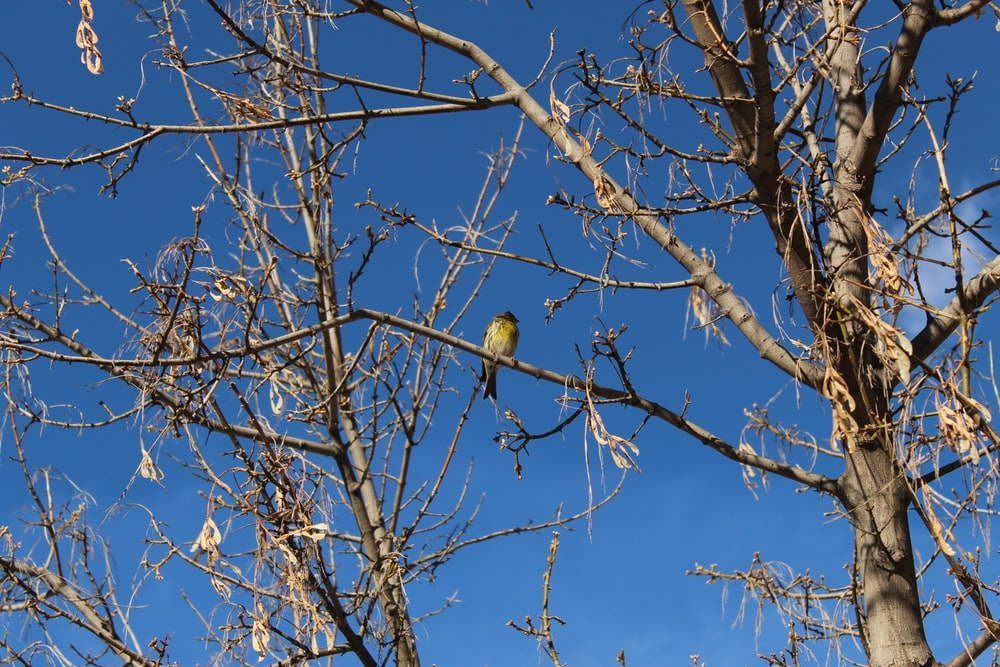 bird perched on bare tree branch during day
