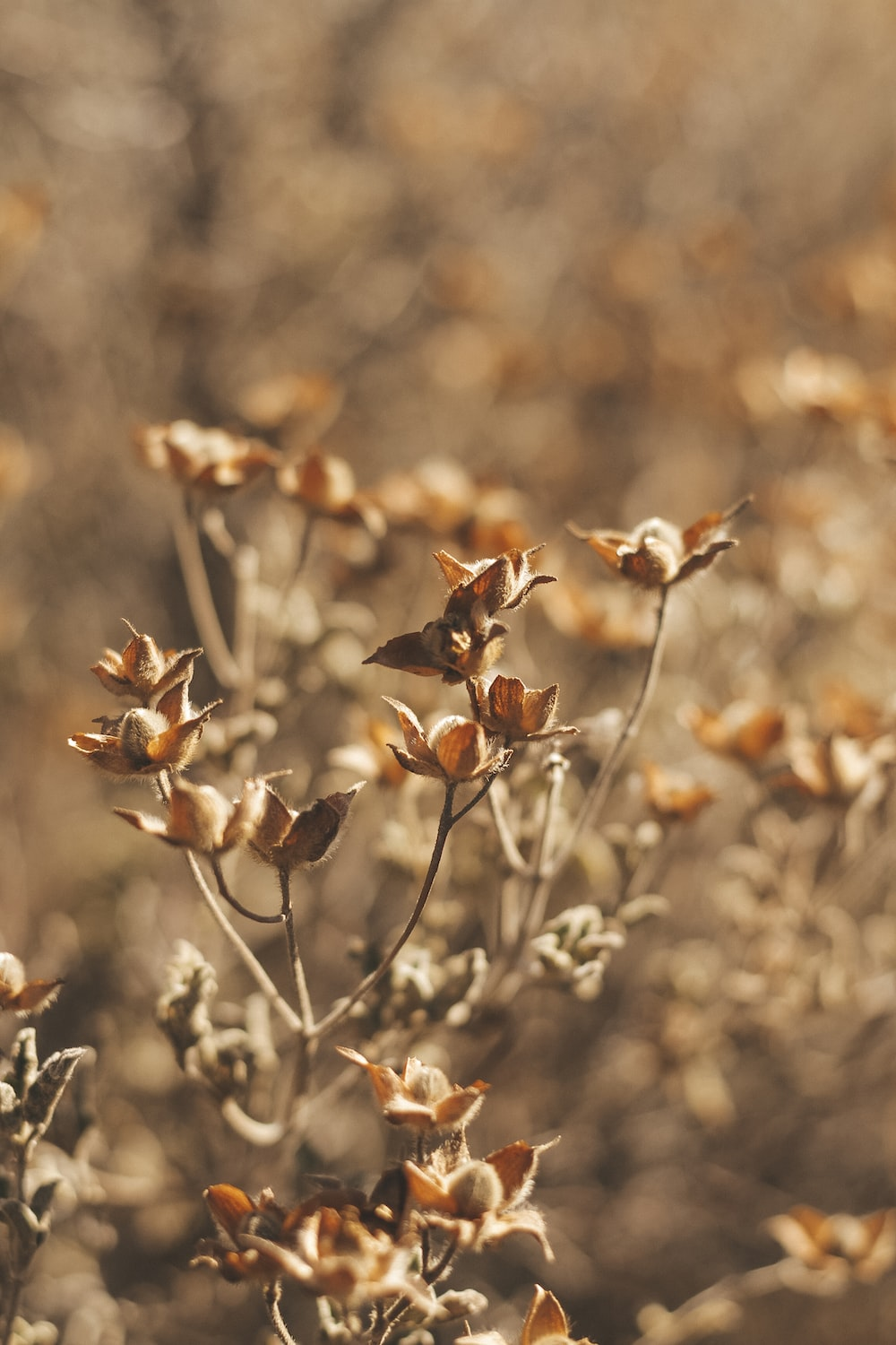 beige petaled flower plants