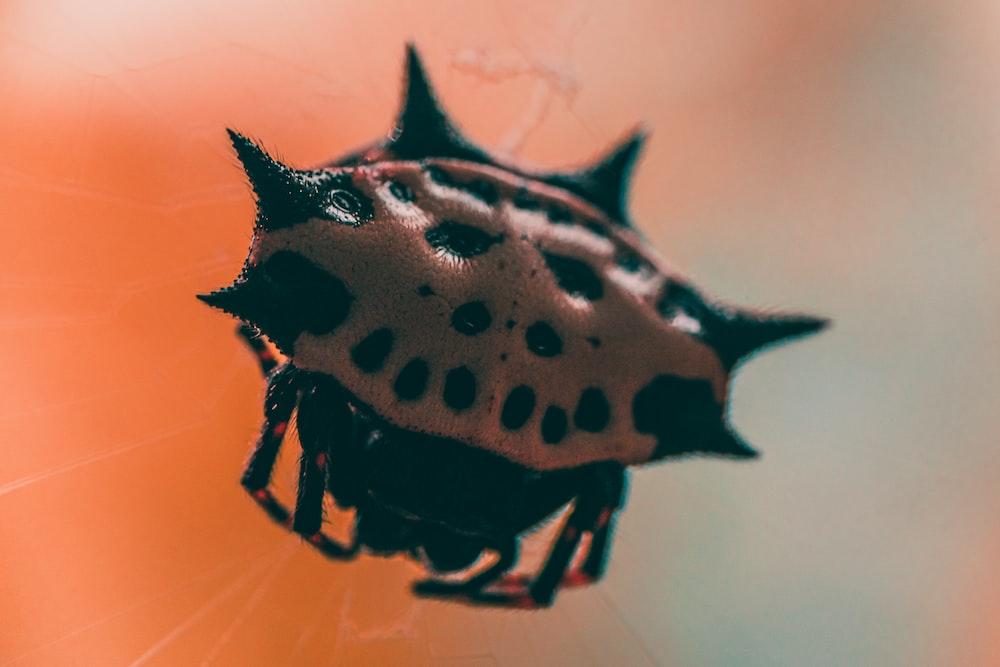 black and beige bug