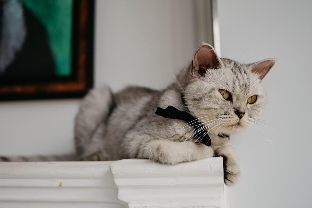 cat on white board