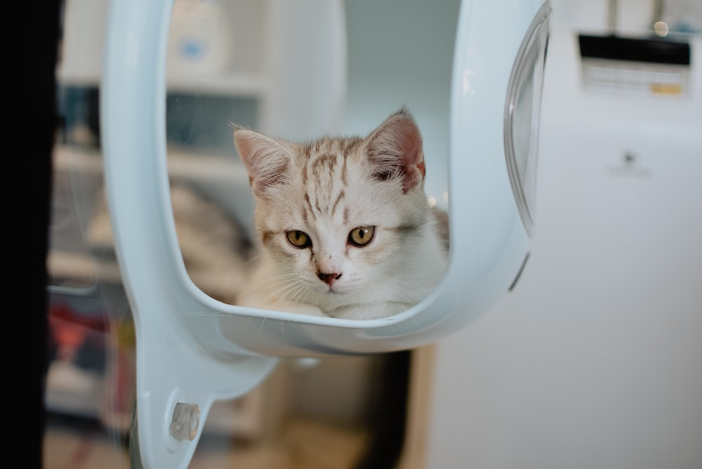 cat inside white container