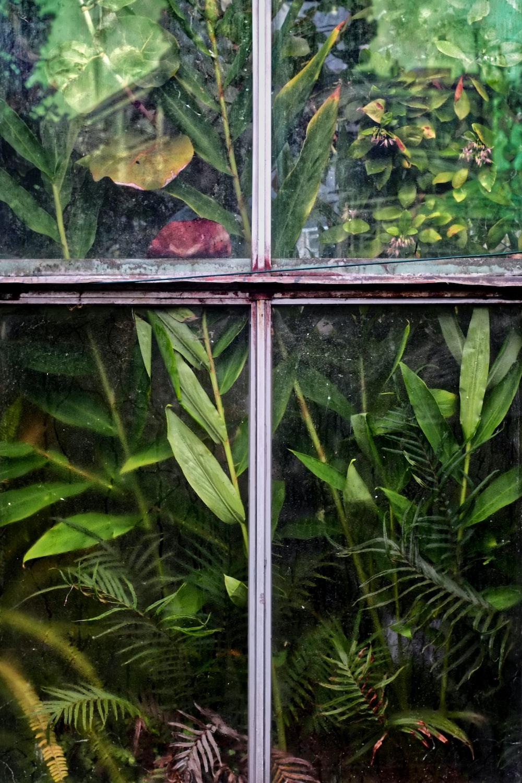 plants behind window