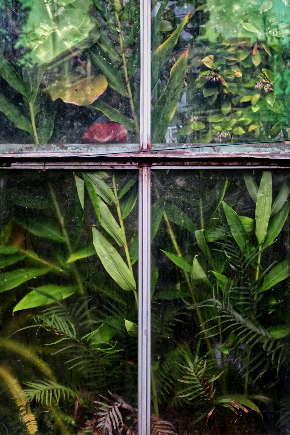 plants behind window